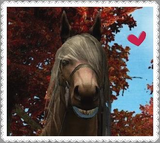 7世代馬の顔(加工済み画像)
